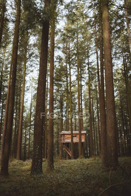 Maison impose aux arbres à feuilles persistantes — Photo de stock