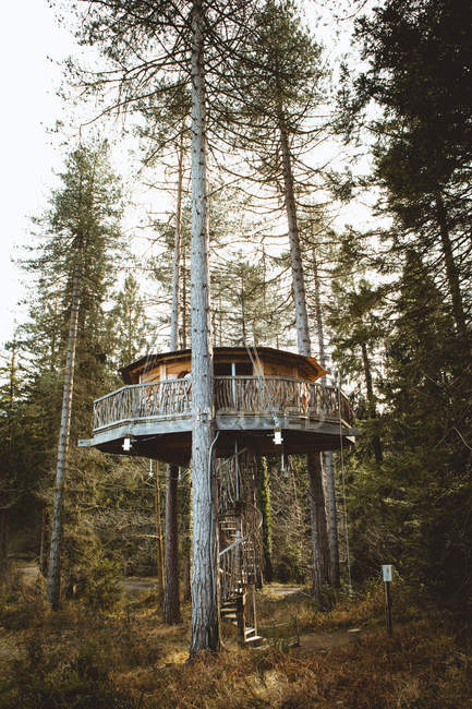 Casa en los árboles en el bosque - foto de stock