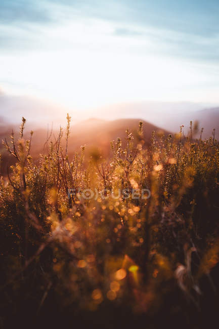 Grass and landscape in sunlight — Stock Photo