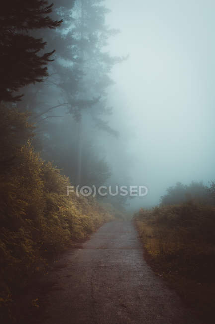 Misty path in forest — Stock Photo