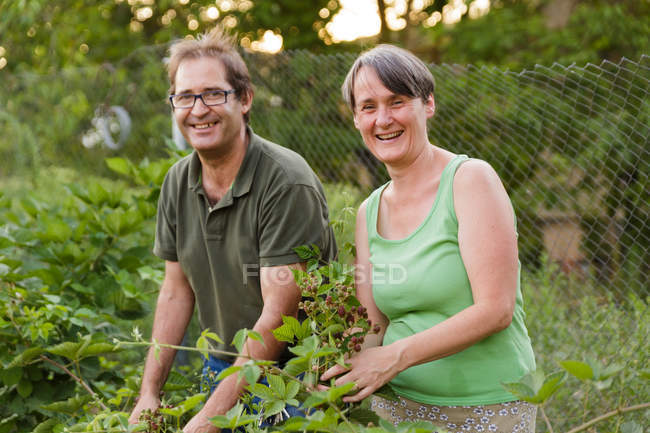 Cheerful mature couple collecting raspberries in garden and looking at camera — Stock Photo