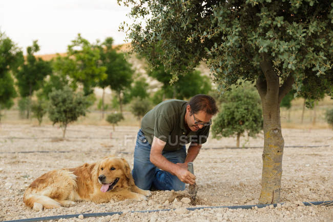 Людина риття отвір у землі поруч з дерева, золотистий ретрівер — стокове фото