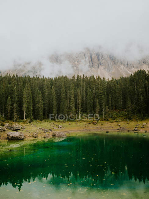 Landscape with ever-green trees — Stock Photo