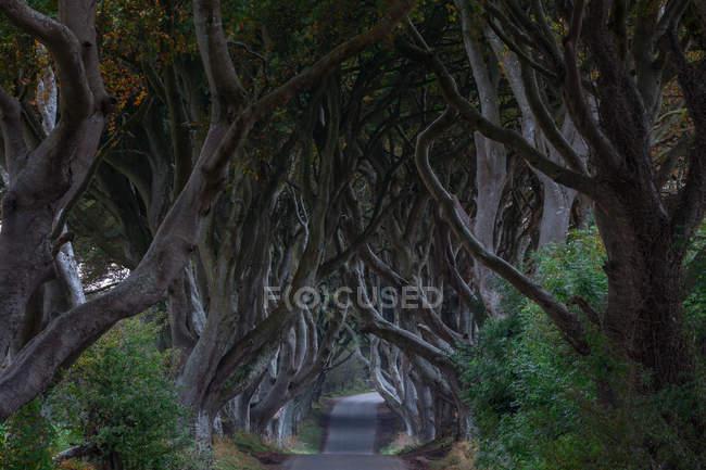 Темные края, Баллиденьги, Северная Ирландия — стоковое фото