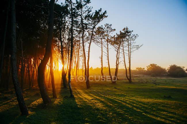 Coucher de soleil bois trhough lumière sur pelouse idyllique — Photo de stock