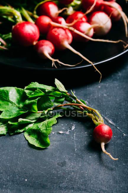Rábano con las hojas en la oscuridad - foto de stock