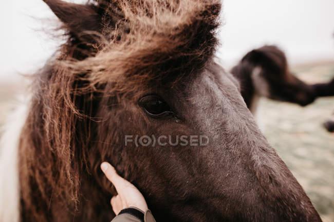 Man stroking horse — Stock Photo