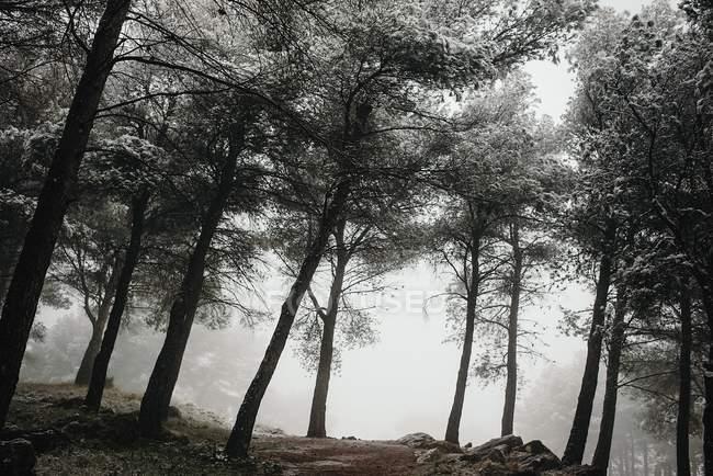 Nebligen kalten Wald — Stockfoto