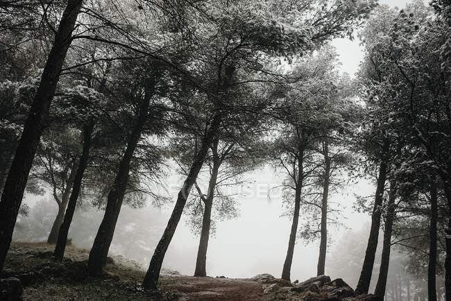 Brumosa selva fría - foto de stock