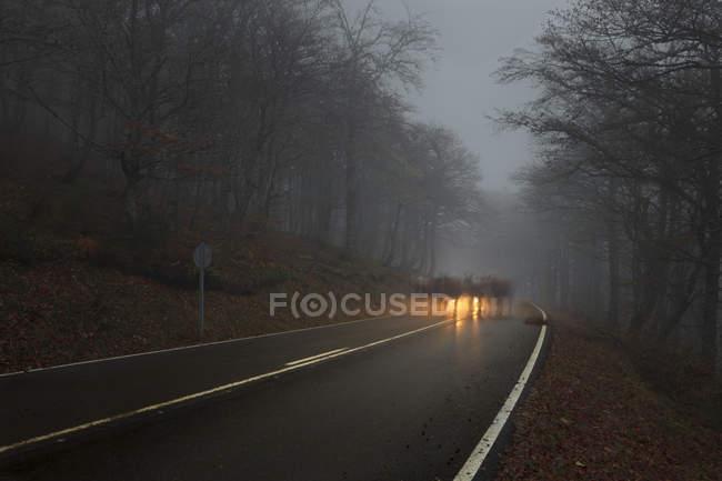 Camino bosque neblinoso - foto de stock