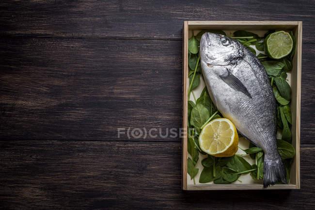 Плоске подання свіжої сирої риби з вапна та базиліком листя на дерев'яні плита — стокове фото