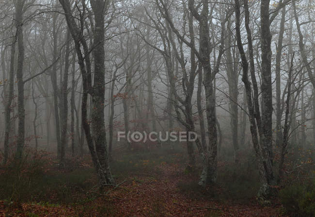 Dark foggy forest — Stock Photo