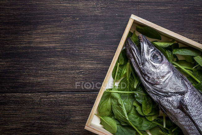 Плоске подання свіжої сирої риби ged з базиліком листя на дерев'яні плита — стокове фото