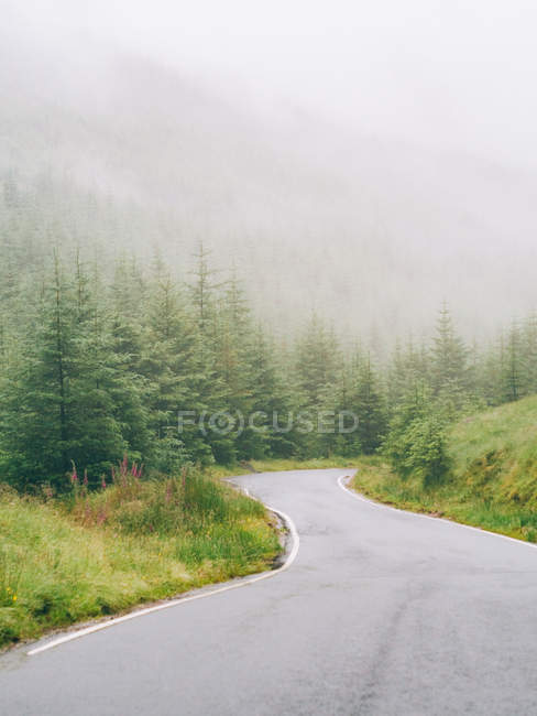 Curvy road in misty forest — Stock Photo