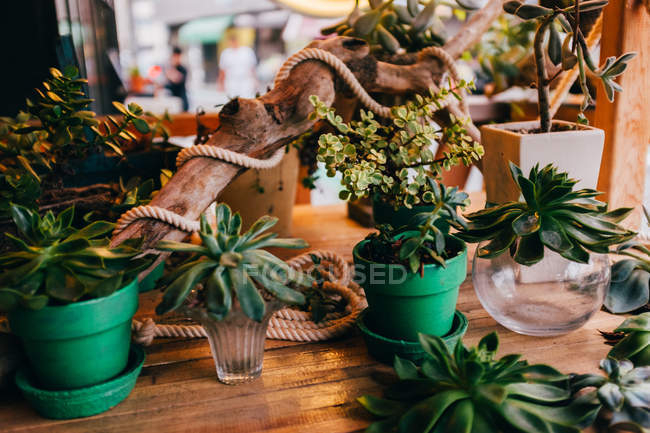 Different flowers in pots — Stock Photo