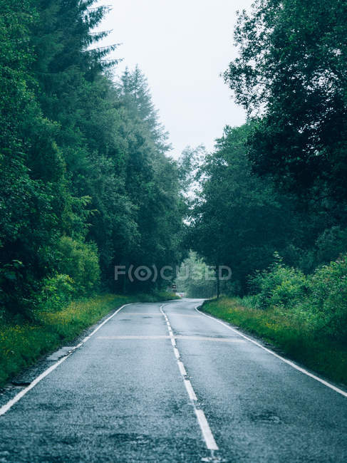 Empty road in green forest — Stock Photo