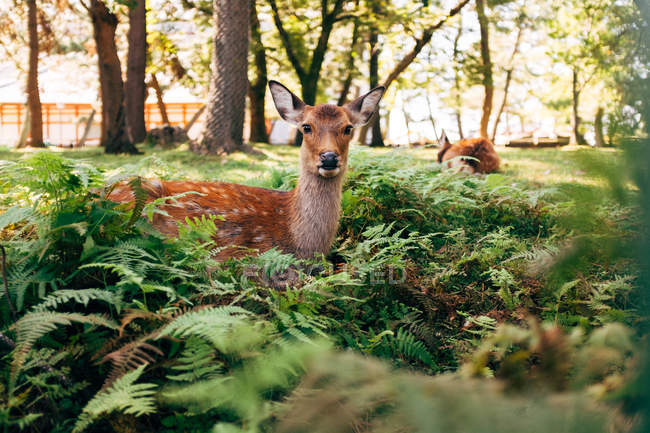 Deer figurine placed in the park — Stock Photo