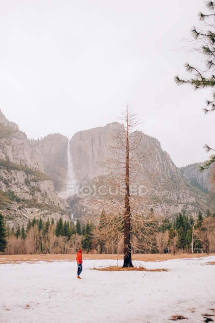 Person near lonely pine — Stock Photo