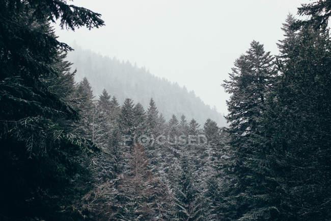 Безтурботний зимовий ліс в денний час — стокове фото