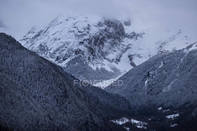 Гірничо-лісового покриті туман — стокове фото