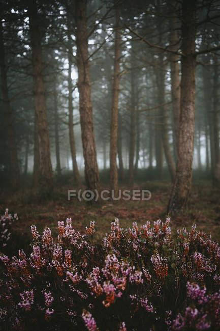 Цветов, растущих в лесу — стоковое фото