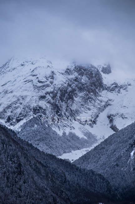 Ліси на гірських — стокове фото