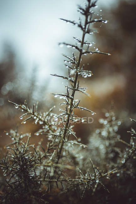 Branche des plantes en gouttes d'eau — Photo de stock