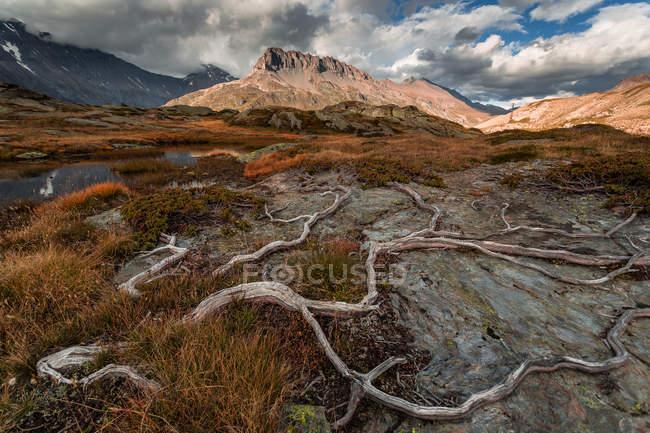 Racines séchées dans la vallée — Photo de stock