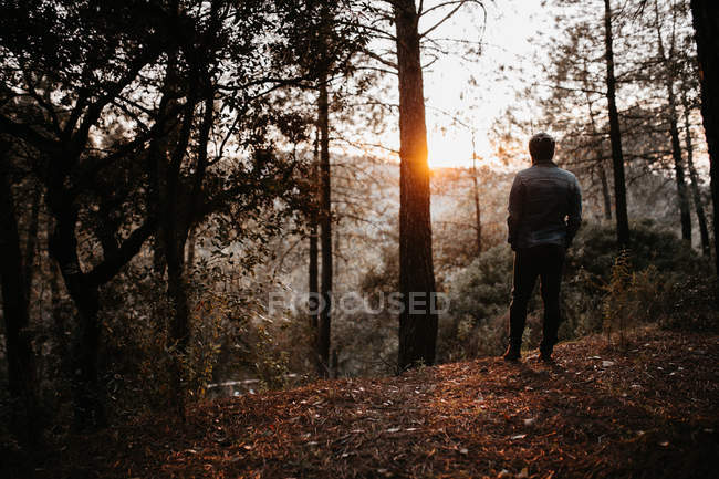Back view of tourist looking at landscape in autumn forest. — Stock Photo