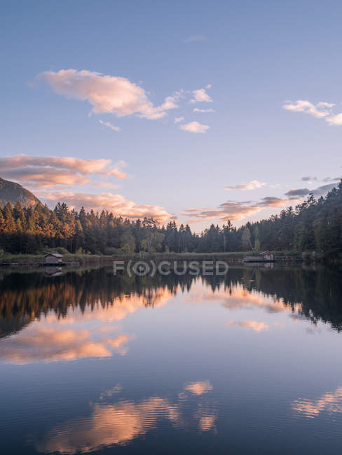 Forest reflecting in lake - foto de stock
