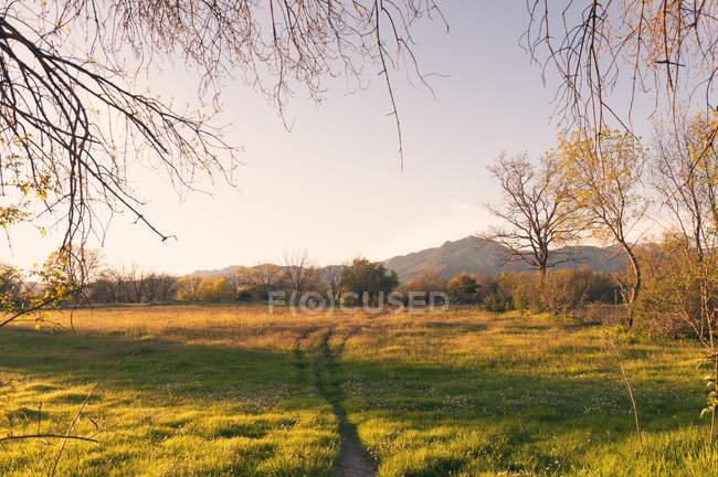 Grüne Wiese mit Bäumen im Wald unter sonnigen Licht — Stockfoto