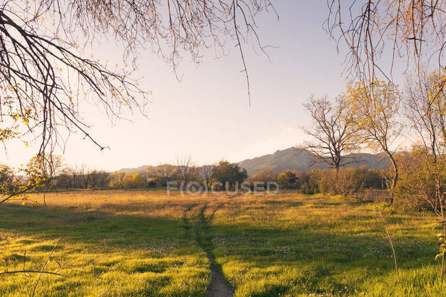 Green lawn with trees in forest under sunny light — Stock Photo