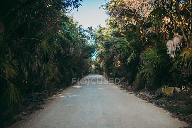 Доріжка серед пальм — стокове фото