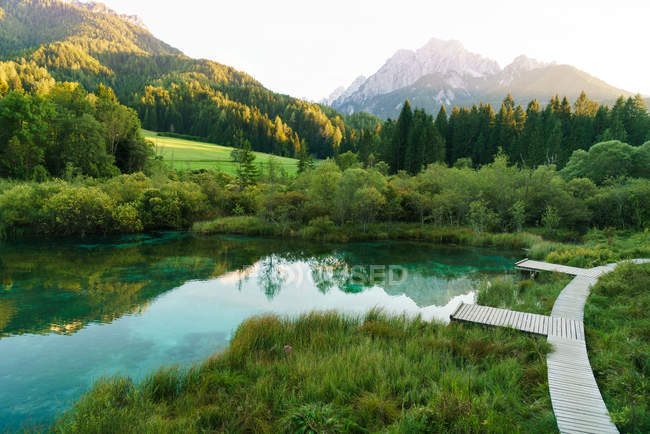 Small pond with clear water among trees o — Stock Photo
