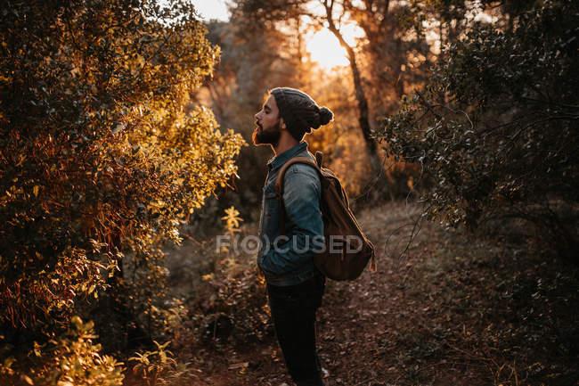 Seitenansicht des Touristen mit Blick auf Baum im Herbstwald. — Stockfoto