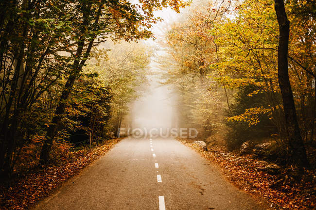 Road in autumn forest leading to foggy nowhere — Stock Photo