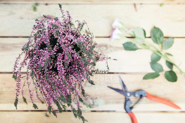 Ramo de flores color púrpura en la superficie de madera con hojas y tijeras de jardín - foto de stock