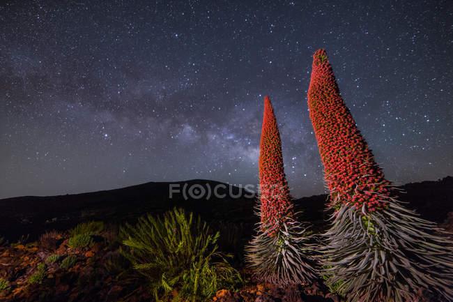 Plantes rouges sur nightsky — Photo de stock