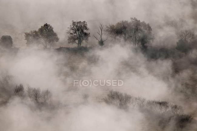 Bosques de otoño en la niebla - foto de stock