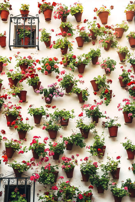 Rows of flowerpots and colorful flower on white wall — Stock Photo