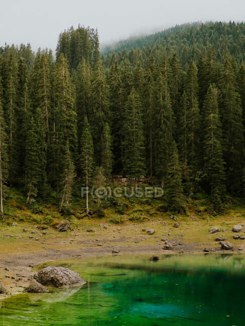 Beautiful ever-green trees in Dolomites, Italy — Stock Photo