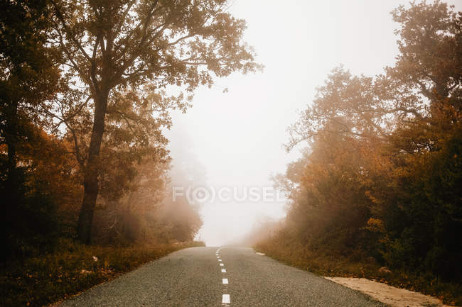 Road in autumn forest on foggy day — Stock Photo