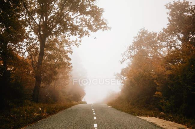 Estrada na floresta de outono no dia nebuloso — Fotografia de Stock