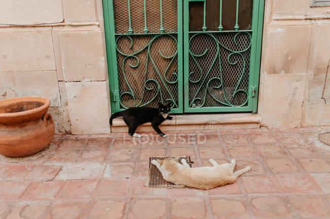 Dos gatos mentira en frente metal decoración puerta verde en la escena de la calle - foto de stock