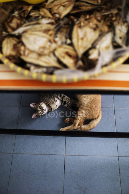 High angle view of two cats lying on tiled floor under counter in shop. — Stock Photo