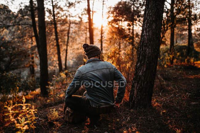 Vista posterior de hombre sentado por árbol en el bosque iluminado - foto de stock