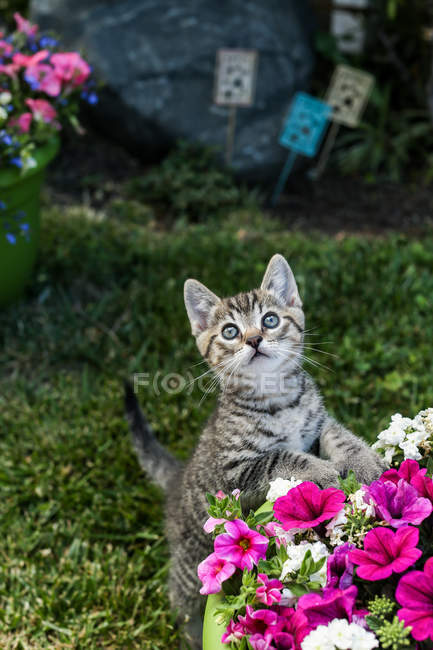 Kitten playing in garden — Stock Photo