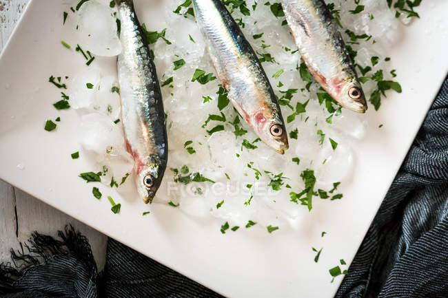 From above three anchovies on ice with parsley in plate — Stock Photo