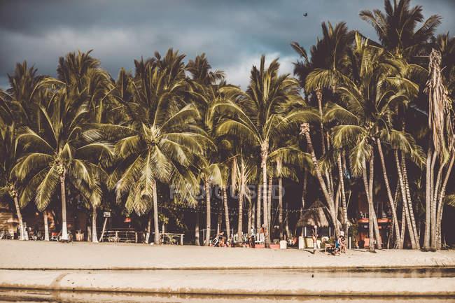 Landscape of palm trees in line on beach in tropics — стокове фото