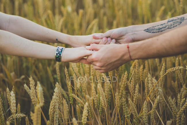 Cropped image of male hands with tattoo holding female hands over rye field on backdrop — Stock Photo